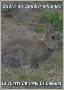 Охота-на-дикого-кролика-214x300.jpg