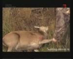 Охота с гоном | Записки великого охотника