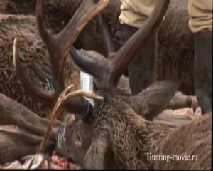 Охотничьи просторы Охота в Монтерее