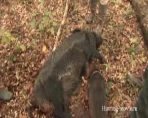 Охотничьи просторы. Охота на кабана в Хорватии