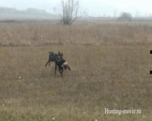 Охотничьи просторы Охота на фазана с легавой в Хорватии