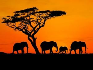 Охотничьи просторы Камерун Сафари 7