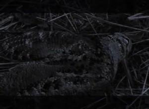 Основной инстинкт- Охота на вальдшнепа
