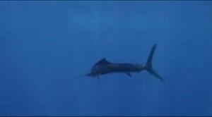Основной инстинкт. Охота на морских гигантов
