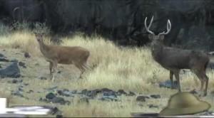 Основной инстинкт. Охота на яванского оленя