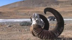 Основной инстинкт- Охота в Киргизии