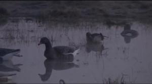 Основной инстинкт. Весенняя охота на гуся. Часть 2