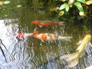 рыба для пруда купить в москве