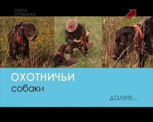 Охотничьи собаки. 16-я серия