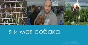 Я и моя собака. Такса. О профессии Ветеринарный врач, Натаска легавой