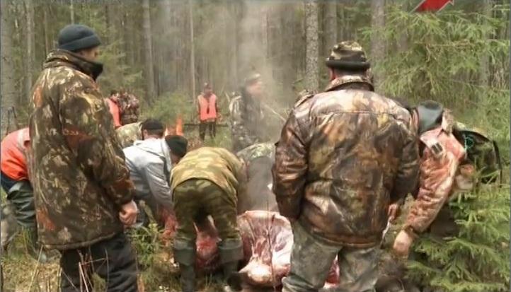 Загонная охота на лося в