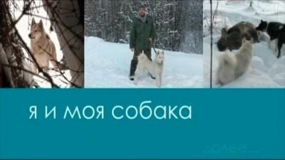 Западно-сибирская лайка  Я и моя собака