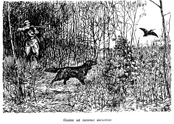 Охота на вальдшнепа. Охота на осенних высыпках