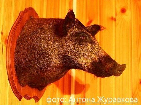 фото: Антона Журавкова