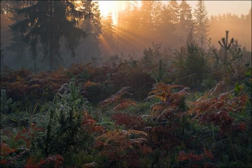 Если вы заблудились в лесу или тайге.