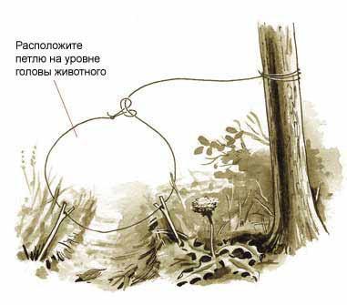 6 простых капканов для добычи пищи в лесу.