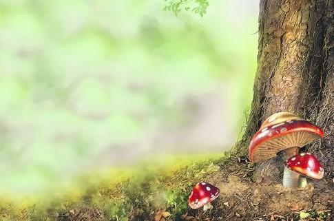 """Собираем грибы: 10 способов не подорваться на """"тихой охоте""""."""