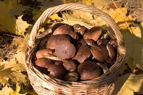 В России начался грибной сезон.