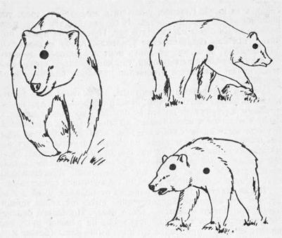 Человек и медведь: Как вести себя при встрече с опасным хищником. Часть 7.